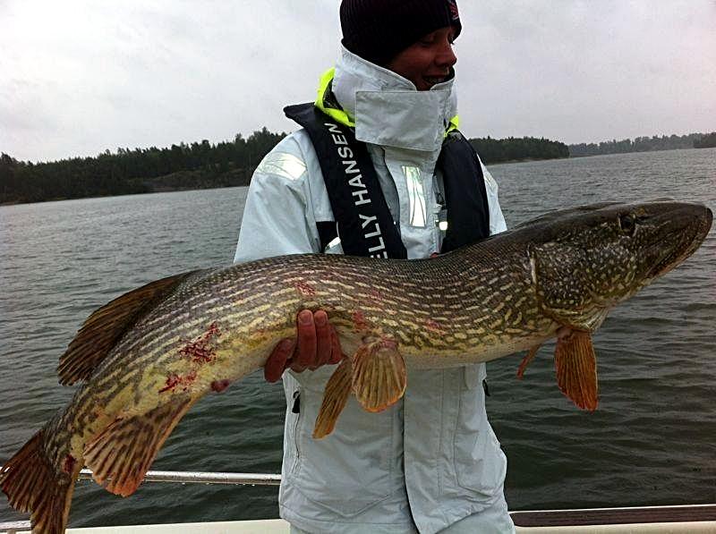 Mattias drömgädda på guidning hösten 2012. 128cm och 13 kg.