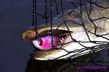 Spännande kallvattensfiske!