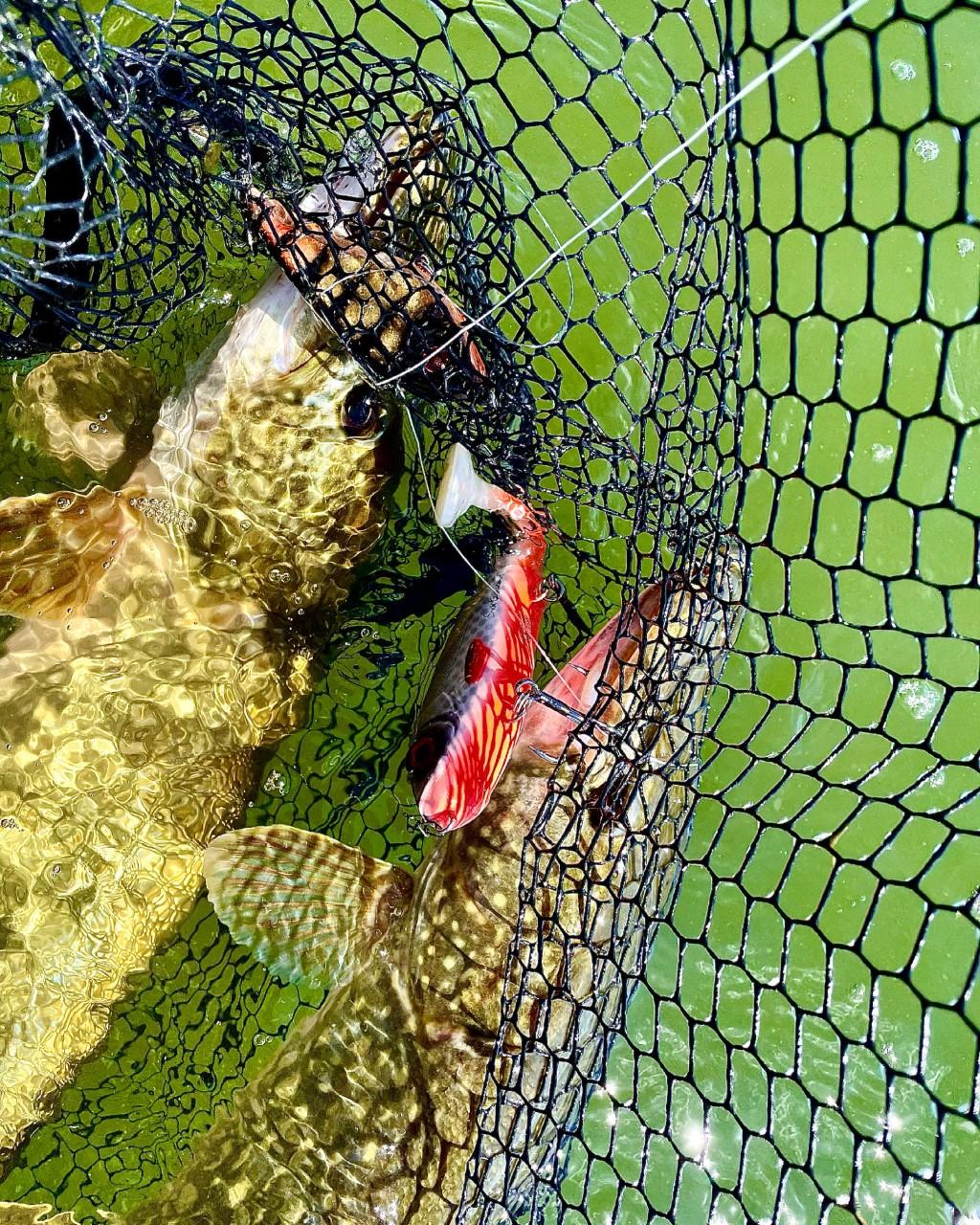 Glödhett fiske!